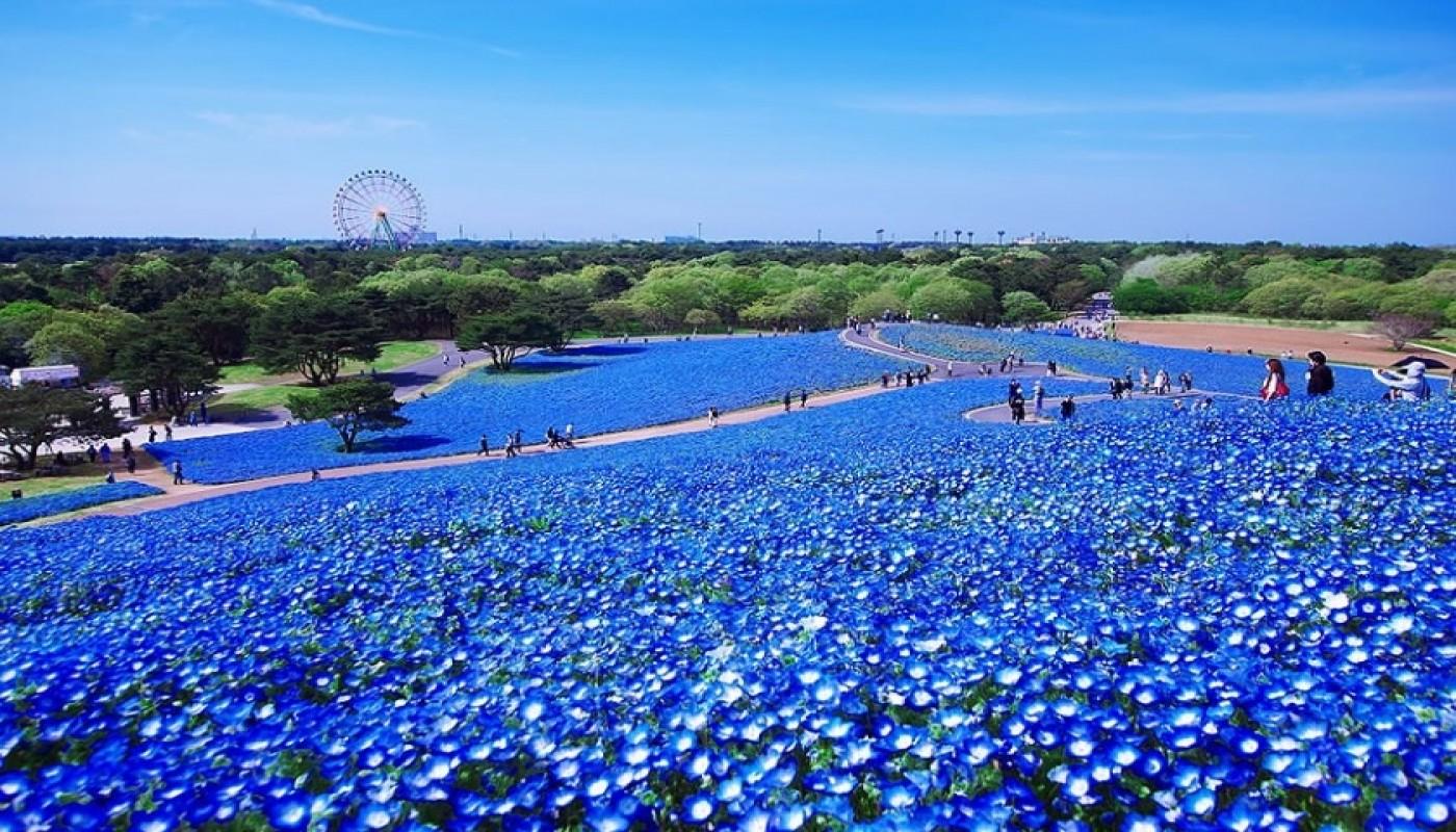 Indahnya Pemandangan Tempat Wisata Di Jepang Saat Musim Semi