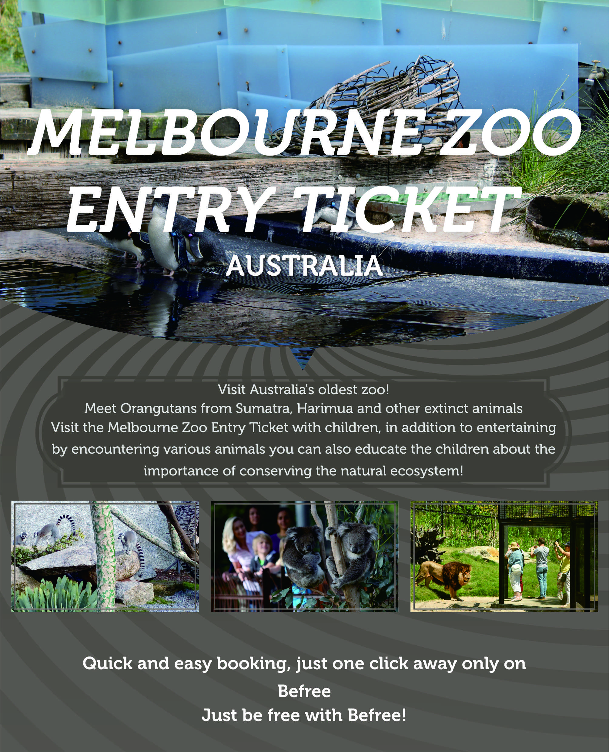 melbourne-zoo-entry-ticket