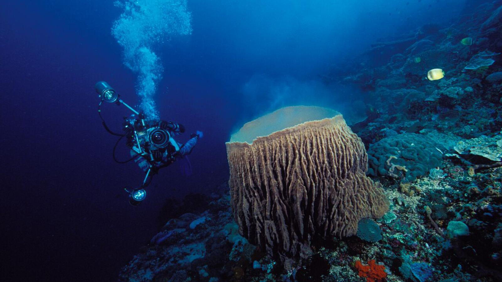Where Is Bali Hai Island bali hai cruise experience: scuba diving and lembongan