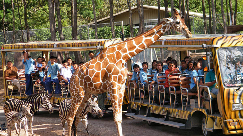 Chiang Mai Night Safari Park Ticket